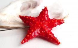красная морская звезда, морская звезда брошь, морская звезда стекло, лэмпворк морская звезда